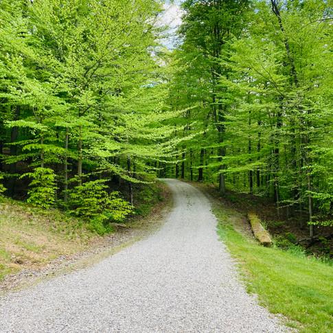 Long tree-lined driveway