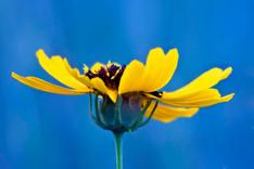 Wildflower 0416