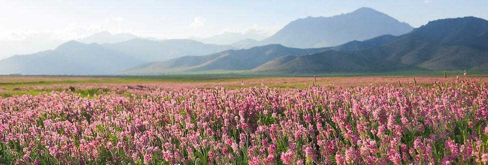 שדה פרחים - הדפסה על קנבס