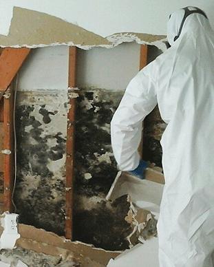 mold-damage-repair.png