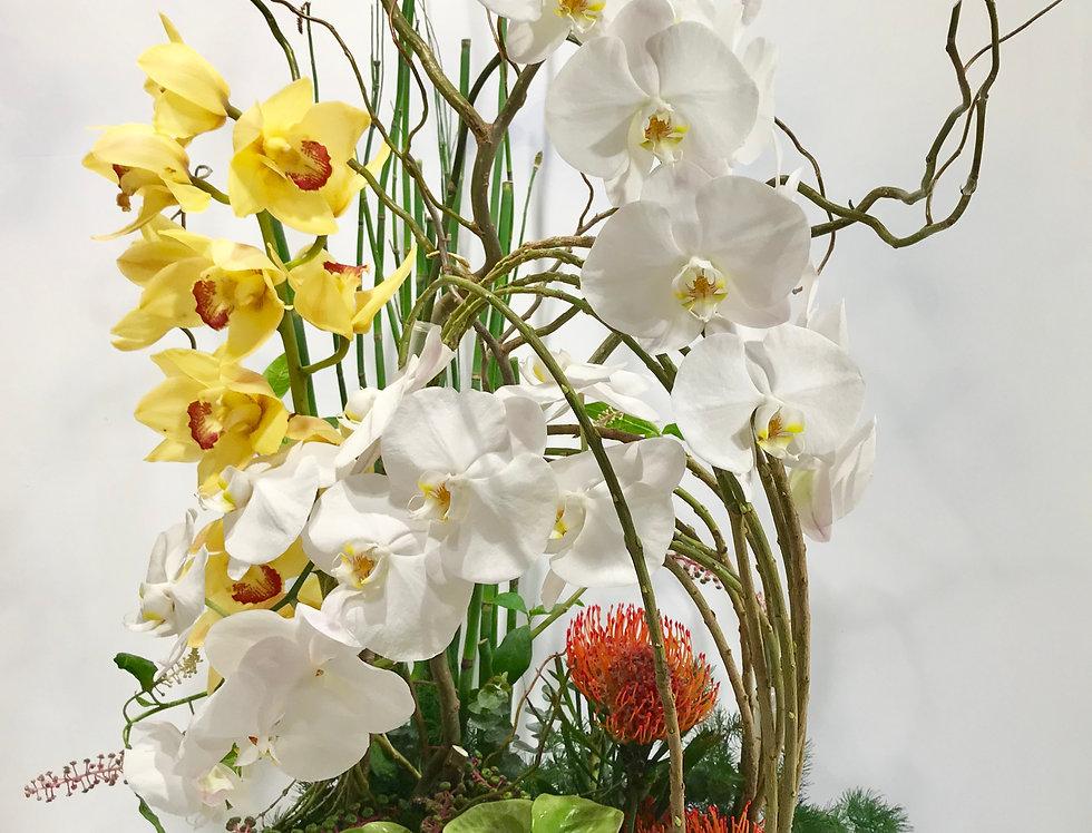蕙蘭蝴蝶蘭綠掌枱花