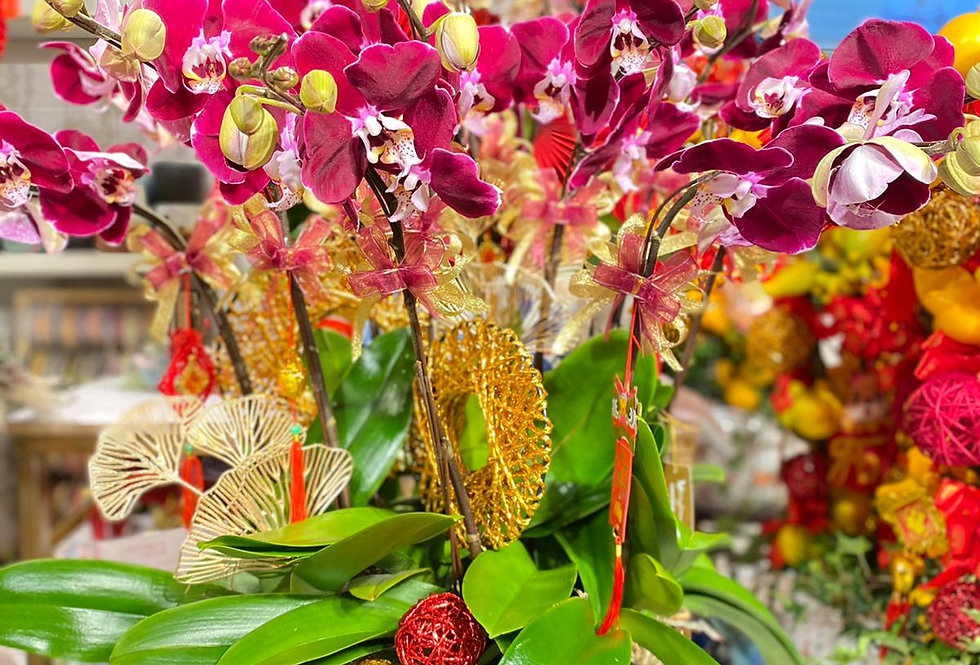12菖蝴蝶蘭 -  豬籠入水 (歡迎訂購各種枝數及品種 請查詢)