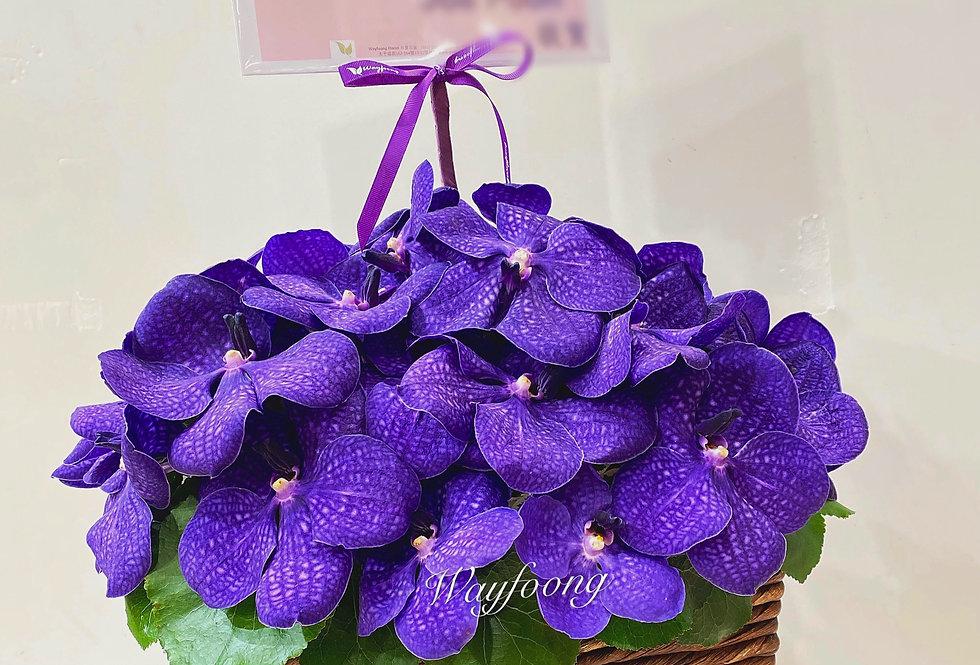 萬代蘭枱花