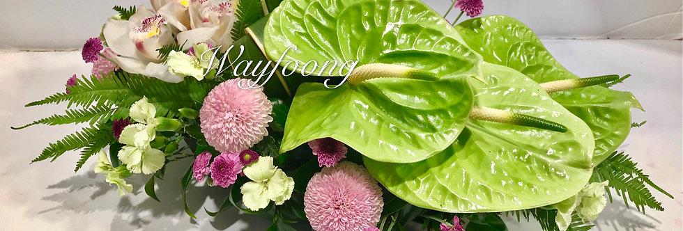 綠掌蕙蘭枱花