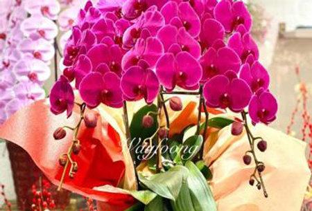 3菖日式串串花(紅花)