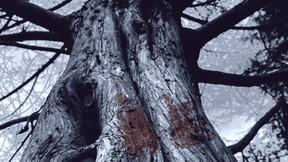 "SAGEN Unveils ""Mammoth"" Album Details; Title-Track Video Available"