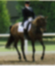ABOUT ME | Classical Dressage