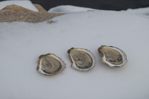 The Colder the Oyster the Better