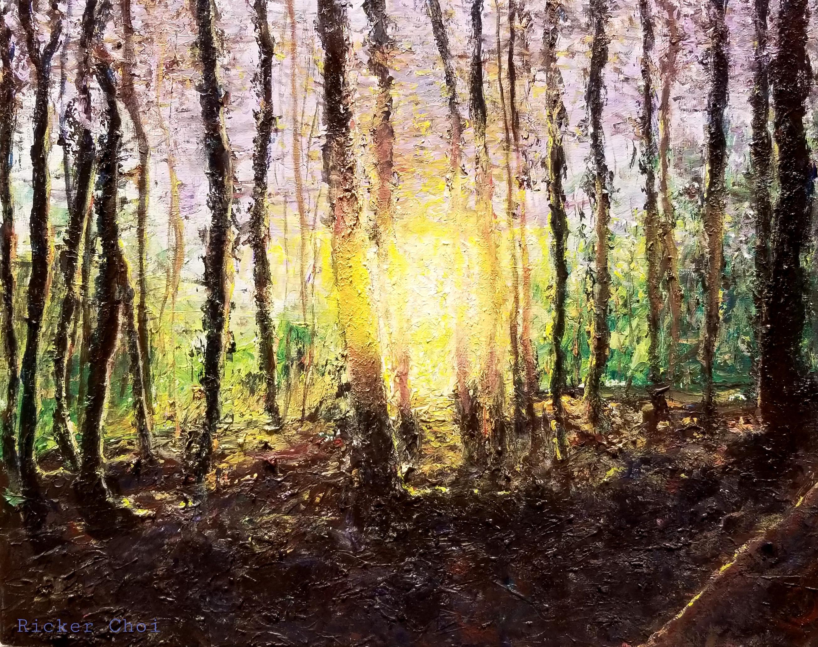 Sun Lit Forest