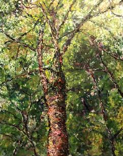 Tree at Gatineau Park