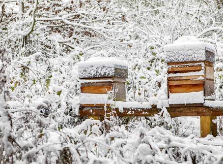 Honeybee's Winter Lockdown