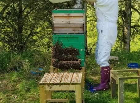 Mindfulness and Beekeeping
