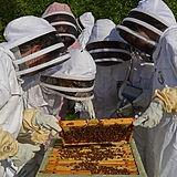 Beekeeper photo.jpg