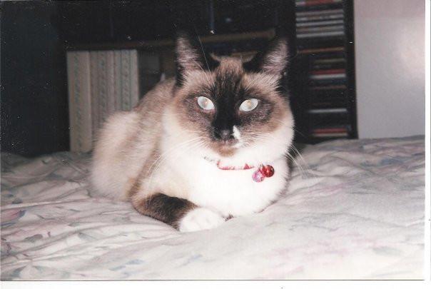 Jennie. She was Luna's cat when I met he