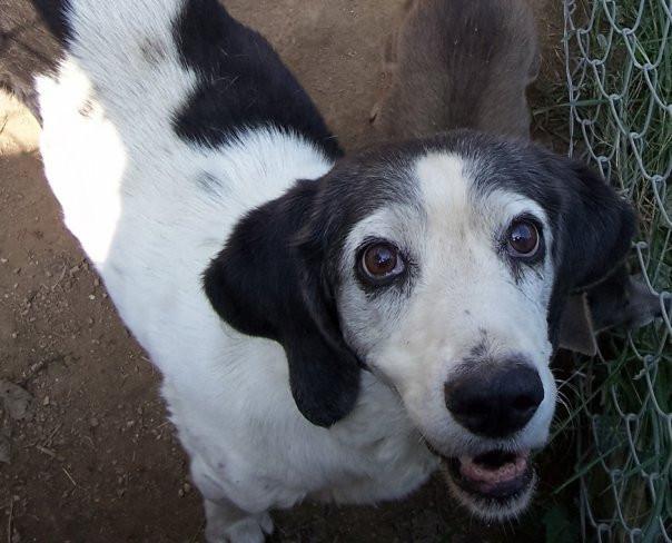 Penny Love. Adopted 2000. Died 2009..jpg