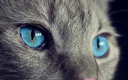 cat-1285634_1920