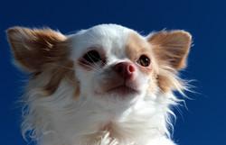 dog-1203225_1920