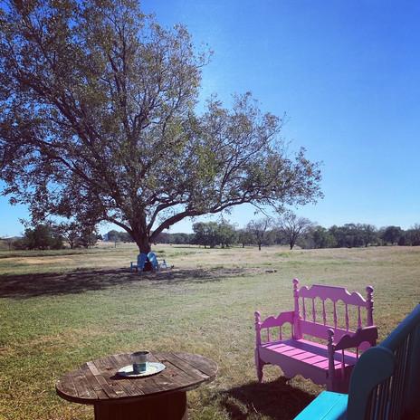 Pecan outside Barn