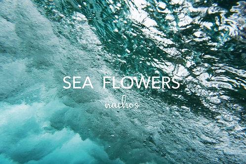 2020年9月下旬頃発売予定 nachosオリジナル作品集 SEA FLOWERS