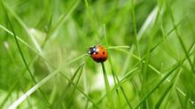 Non tutti gli insetti sono dannosi. Anzi!