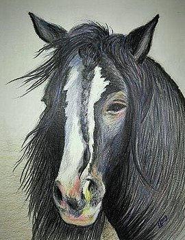 gypsy-vanner-stallion-lillian-lcoury.jpg