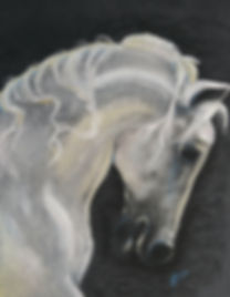1019161506a~Stallion.jpg