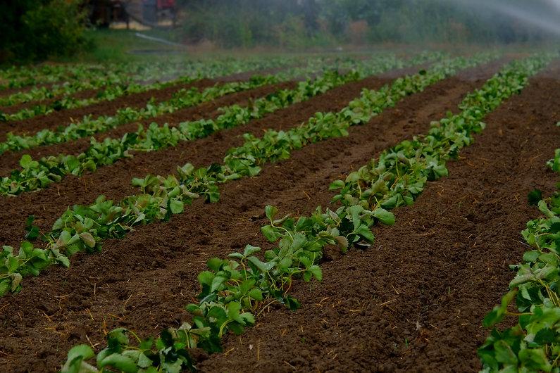 water-plant-fog-field-farm-ground-866959