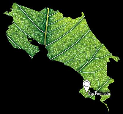 Costa Rica Leaf.png