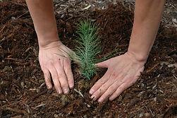Planting Seedling.jpg