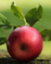 apple-2924531_960_720.jpg