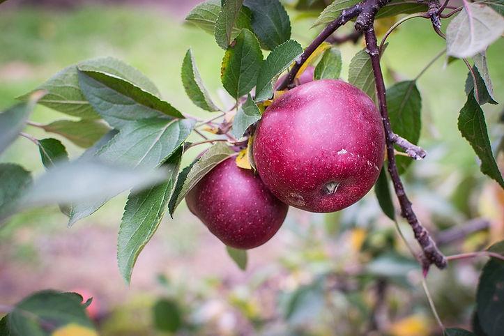apple-1176405_960_720.jpg