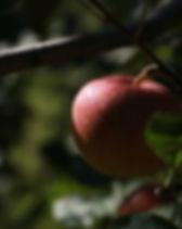 apple-3782683_960_720.jpg
