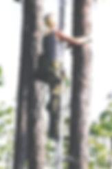 Donelle Schwalm red-cockaded woodpeccker nest check