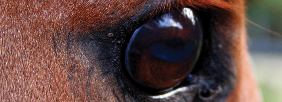 Top class horseracing throughout Europe