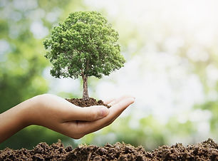 How-To-Plant-a-Tree.jpg