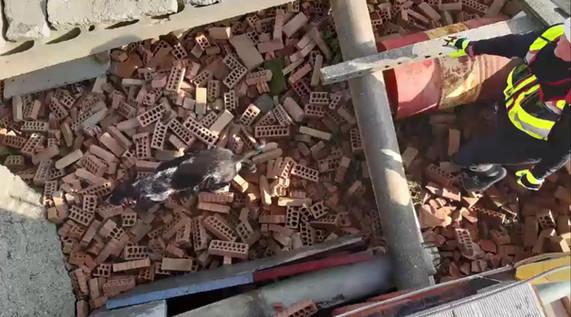 Havana rubble search.jpg