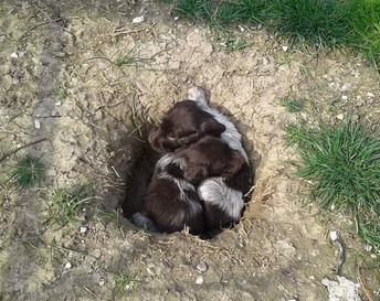 Puppiestogethersmall.jpg