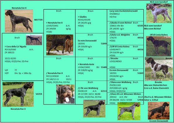 Cora illustrated pedigree.jpeg