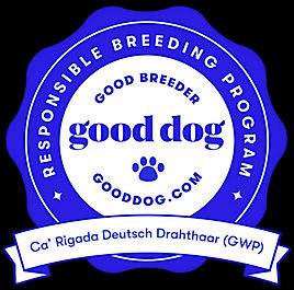 Goodbreeder Badge.jpg