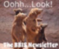Bear Newsletter.jpg