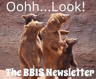 Bear Newsletter.jpg