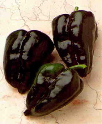 Pepper Ancho San Luis