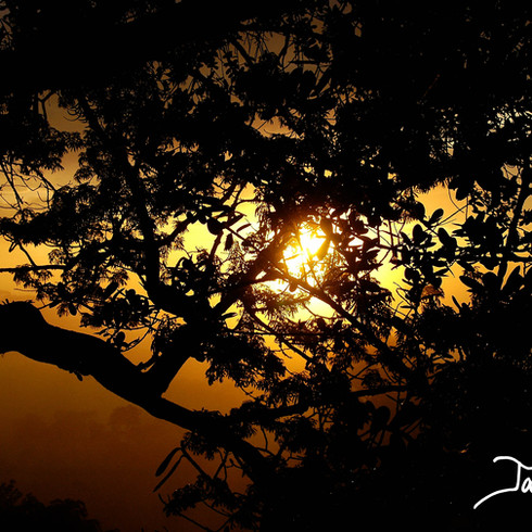 Amazonia at sunrise