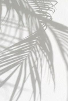 Palm leaves shadows_.jpg