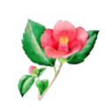camillia color_edited.png