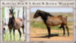 Morgan Foal