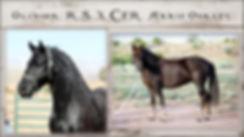 2019 Horses1.jpg