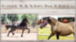 Adobe 2018 Foals-004.jpg