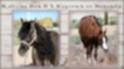 Morgan Foals