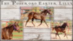 Adobe 2018 Foals.jpg